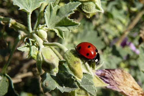 Combating Aphids