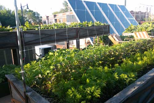 Green Roof Or Roof Garden