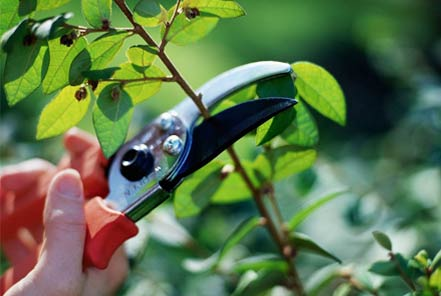 landscaping-services-pruning