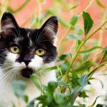 landscaping for pets